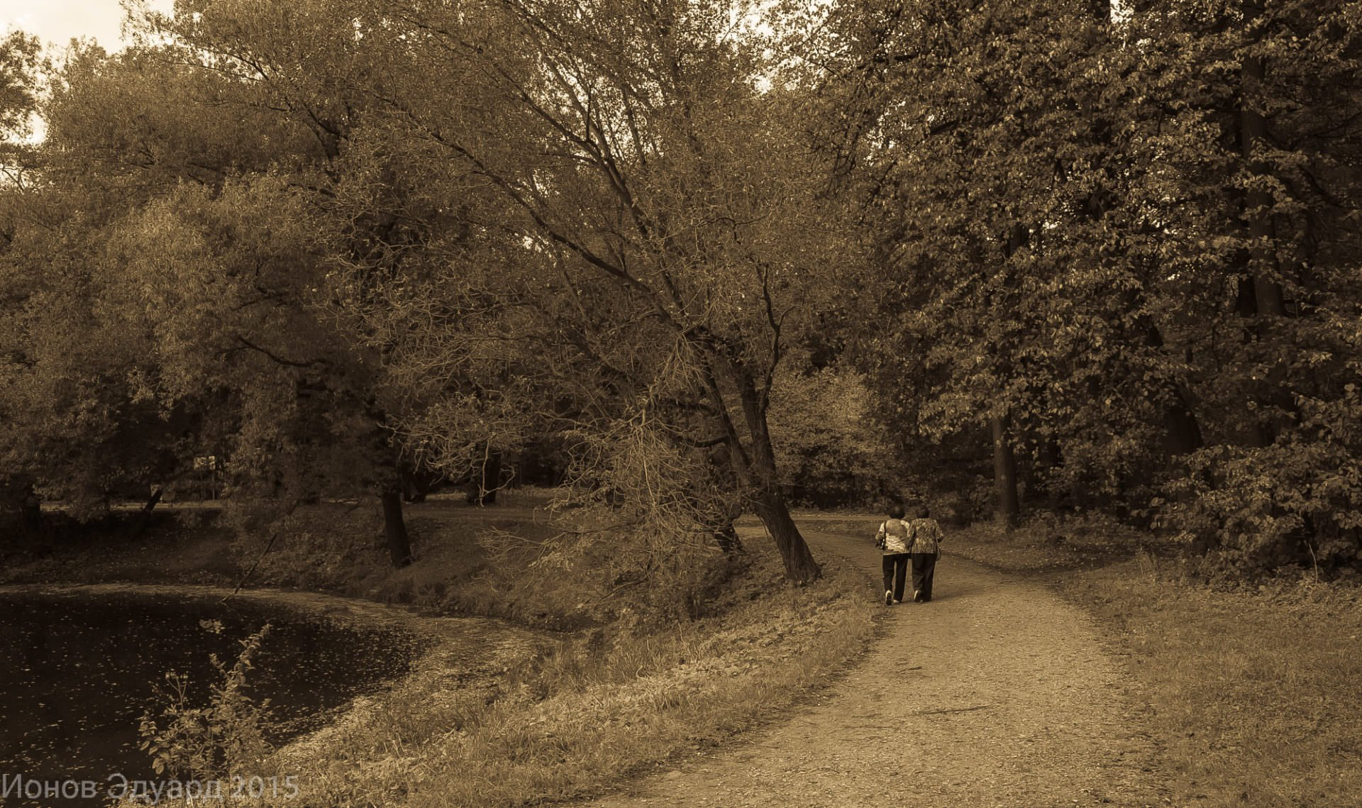 Осень в парке кузьминки