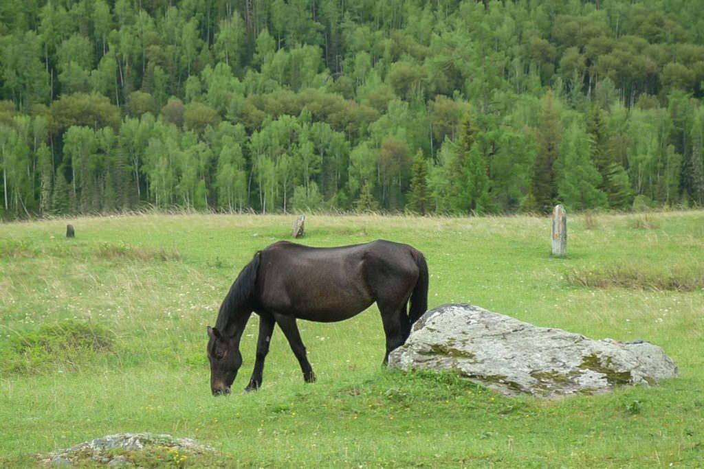 Одинокая лошадь