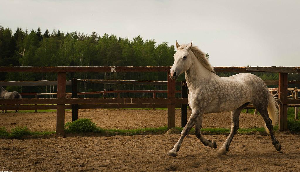 Фотографирование лошади