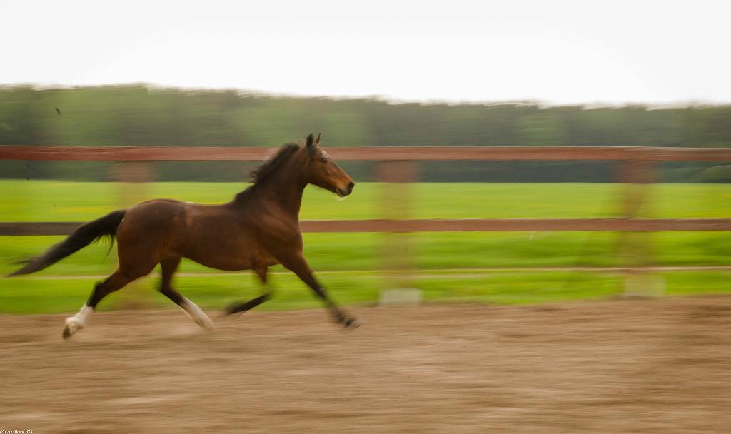 Лошади в конном клубе